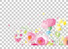 水彩花卉背景,水彩画,洋红色,野花,植物,春天,花卉,花卉设计,开花