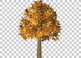 家谱背景,落叶,枫树,木本植物,枫树,植物,树皮,飞机树族,干线,黄