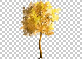 家谱背景,枫树,飞机树族,分支,娘毛树,木本植物,黄色,细枝,植物,