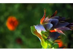 地球,花,花,壁纸,(315)