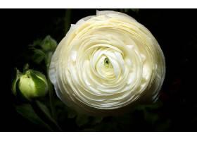 地球,玫瑰,花,壁纸,(135)