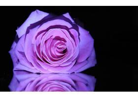 地球,玫瑰,花,壁纸,(137)