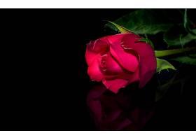 地球,玫瑰,花,壁纸,(138)