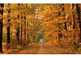 地球,秋天,小路,壁纸,