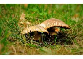 地球,蘑菇,壁纸,(70)