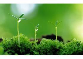 地球,关闭,起来,植物,绿色的,特写镜头,巨,壁纸,