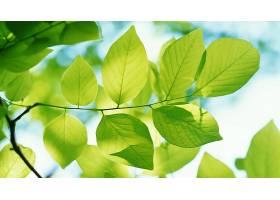 地球,叶子,绿色的,特写镜头,自然,壁纸,
