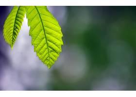 地球,叶子,自然,壁纸,
