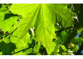 地球,叶子,壁纸,(210)