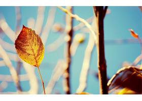 地球,叶子,壁纸,(221)