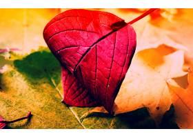 地球,叶子,壁纸,(226)