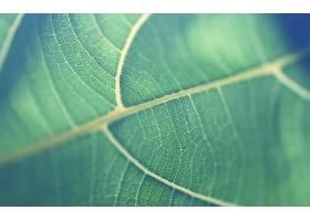 地球,叶子,壁纸,(9)