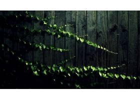 地球,叶子,栅栏,藤,壁纸,