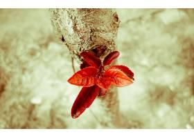 地球,叶子,树枝,壁纸,