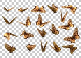 蝴蝶卡通,机翼,鞋,飞蛾与蝴蝶,昆虫,传粉者,蛾子,颜色,渲染,蝴蝶,