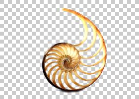 房地产背景,海螺,蜗牛和鼻涕虫,腔鹦鹉螺,螺旋,贝壳,鹦鹉螺,鹦鹉