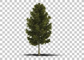 家谱背景,飞机树族,松科,云杉,针叶树,木本植物,橡木,生物群,火灾