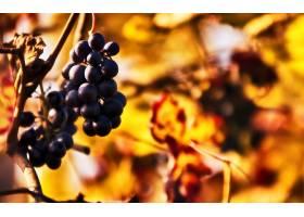 食物,葡萄,水果,壁纸(51)