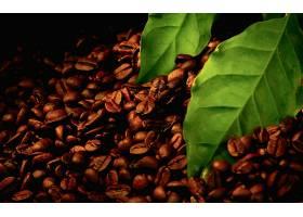 食物,咖啡,叶子,壁纸
