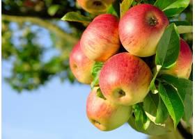 食物,苹果,水果,壁纸(40)