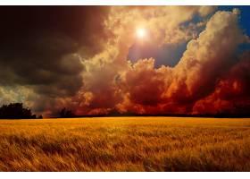 地球,云,风景,天空,太阳,操纵,领域,小麦,壁纸,