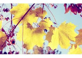 地球,叶子,壁纸,(225)