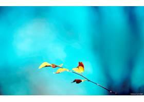 地球,叶子,壁纸,(230)