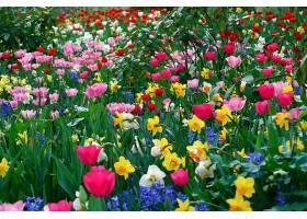 地球,花,花,领域,草地,郁金香,草,叶子,花瓣,水仙花,壁纸,