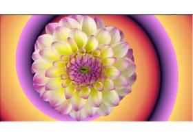 地球,花,花,黄色,紫色,壁纸,