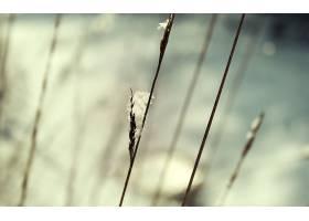 地球,茎,壁纸,(2)