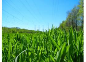 地球,草,壁纸,(2)