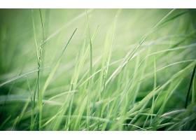 地球,草,壁纸,(26)