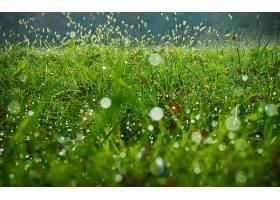 地球,草,壁纸,(48)