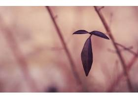 地球,叶子,树枝,壁纸,(1)