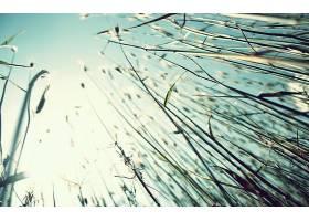 地球,草,壁纸,(64)