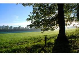地球,日出,风景,风景优美的,领域,草,树,天空,叶子,壁纸,