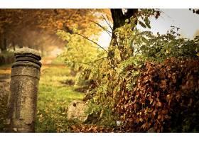 地球,秋天,壁纸,(40)