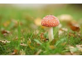 地球,蘑菇,壁纸,(2)