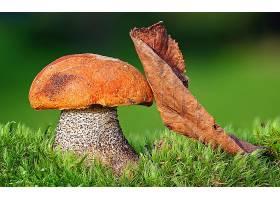 地球,蘑菇,壁纸,(34)