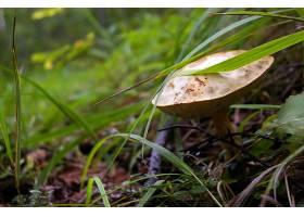地球,蘑菇,壁纸,(43)