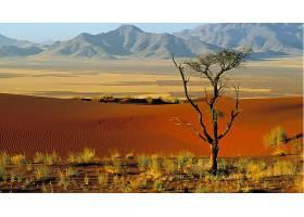 地球,沙漠,壁纸,(40)