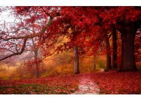 地球,小路,树,秋天,壁纸,