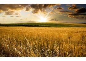地球,领域,小麦,日出,太阳,阳光,壁纸,