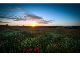 地球,领域,花,日出,风景,云,壁纸,