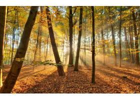地球,阳光,森林,风景,壁纸,
