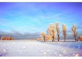 地球,冬天的,天空,云,领域,树,严寒,雪,壁纸,