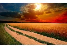 地球,日落,领域,小麦,天空,云,操纵,小路,壁纸,