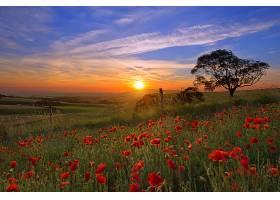 地球,日落,风景,风景优美的,花,天空,云,领域,罂粟,日出,壁纸,