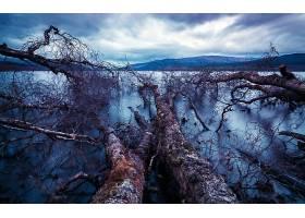 地球,树,树,壁纸,(40)