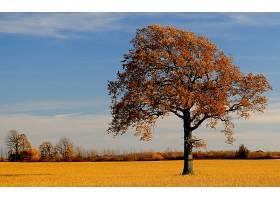 地球,树,树,壁纸,(58)